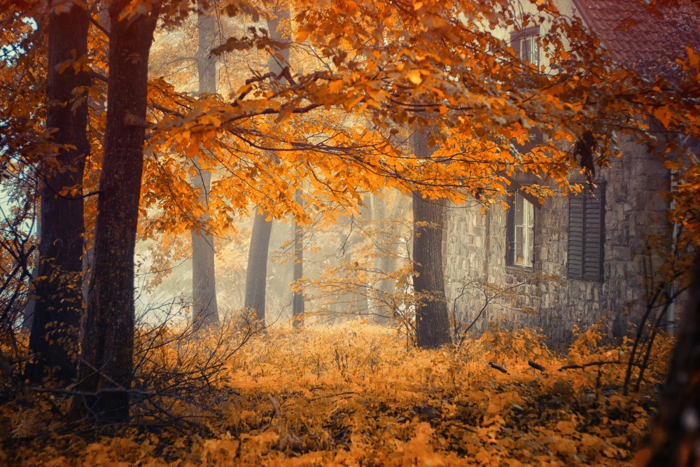 A piece of fine art art photography titled Hideaway by Ildiko Neer
