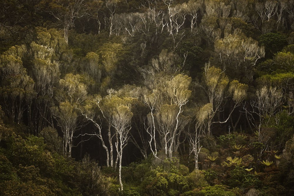 A piece of fine art art photography titled Dark Forest by Stanley Loong