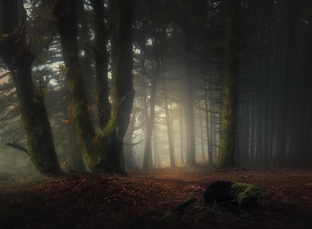 A piece of fine art art photography titled Autumn by Chris Kaddas
