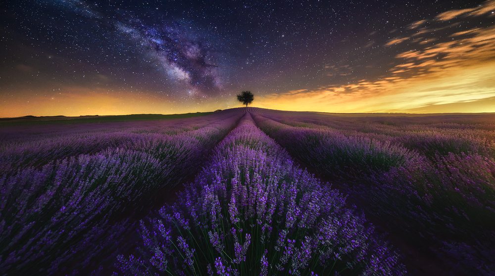 A piece of fine art art photography titled The Lavenders Field and Milky Way II by Jesús M. García