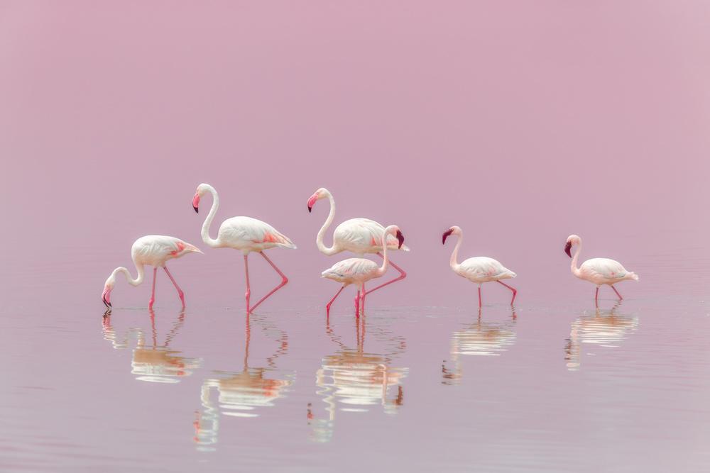 A piece of fine art art photography titled Flamingos by Eiji Itoyama