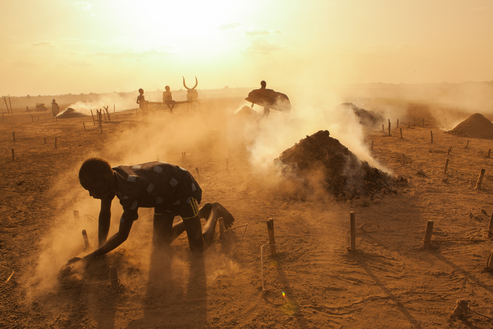 View this piece of fine art photography titled Saving The Cows by Hesham Alhumaid