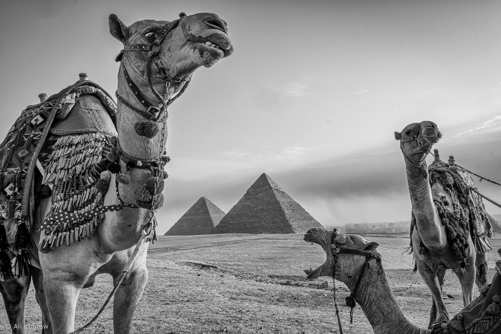 View this piece of fine art photography titled Camel Humour by Kei Sasaki