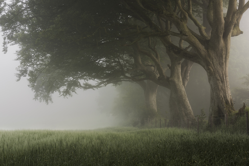 A piece of fine art art photography titled A Misty Summer's Morn by Johnny Baird