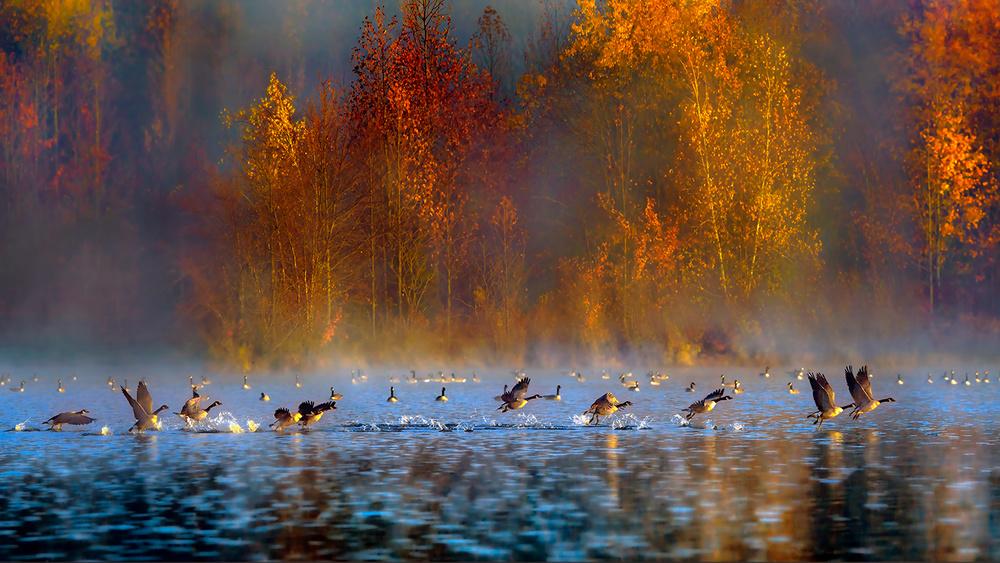 A piece of fine art art photography titled Audubon's Plainsboro Preserve by Hua Zhu