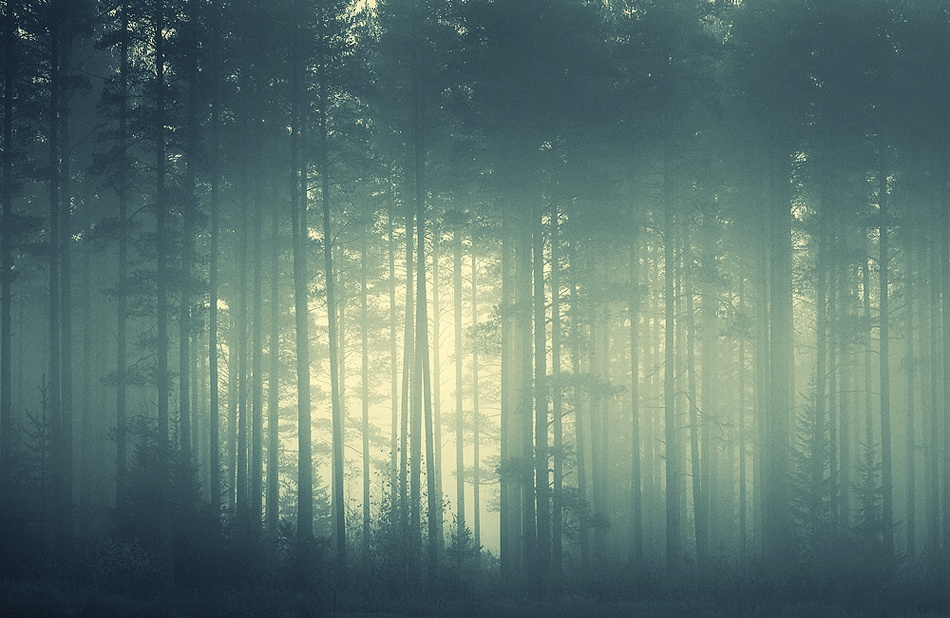 A piece of fine art art photography titled Foggy Forest by Joni Niemelä