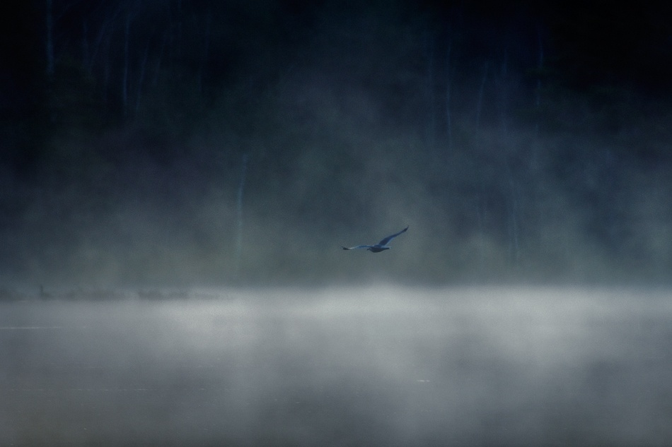 A piece of fine art art photography titled In the Mist II by Daniel Hasselberg