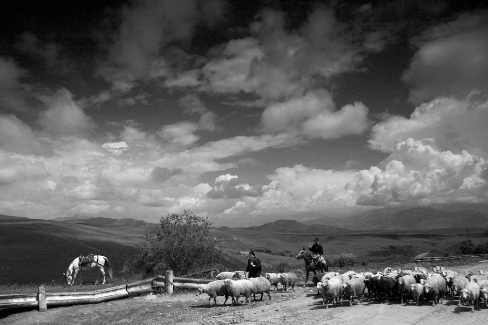 A piece of fine art art photography titled White Horse and Sheep by Balazs Pataki