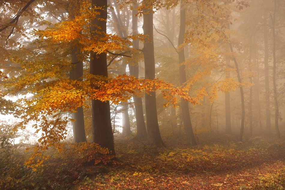 A piece of fine art art photography titled Edge of the Woods by Nicolas Schumacher