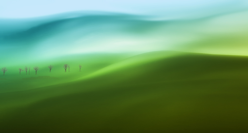 A piece of fine art art photography titled Into the Green by Uschi Hermann