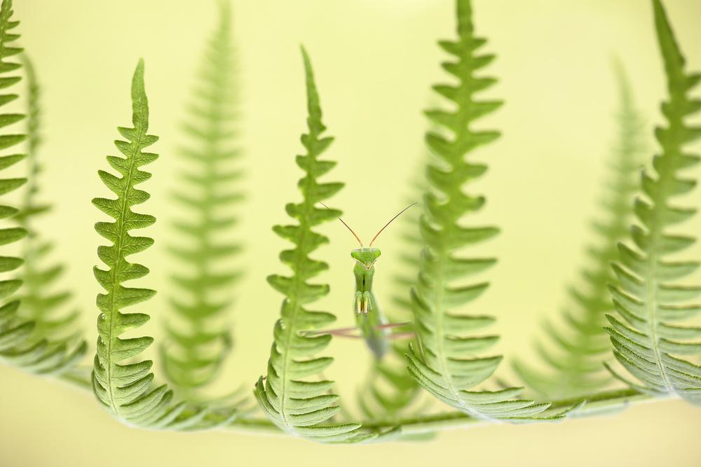 A piece of fine art art photography titled Between Ferns by Ruben Perez (fris)