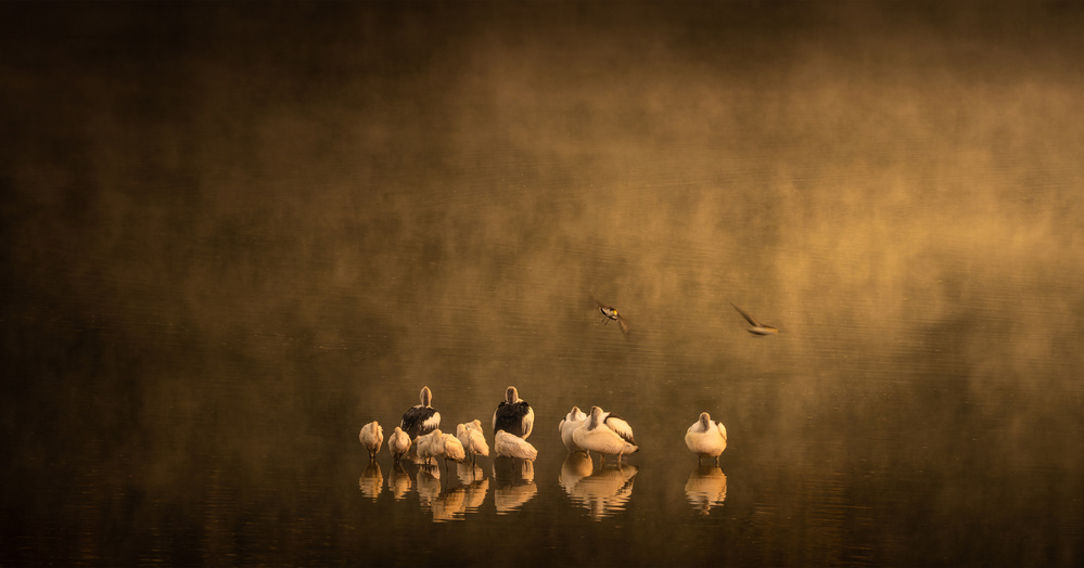 A piece of fine art art photography titled Misty Morn by Grant Galbraith