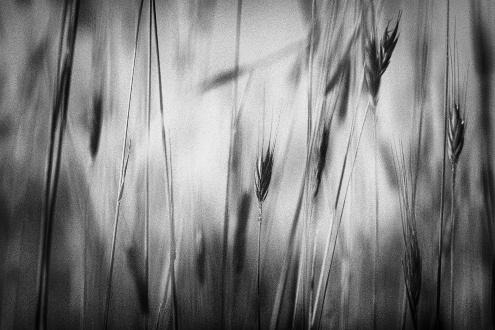 A piece of fine art art photography titled If Only Life Could Be So Perfect by Cecy Jup