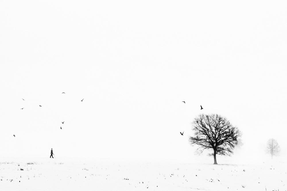 A piece of fine art art photography titled Ballade Ardennaise by eric drigny