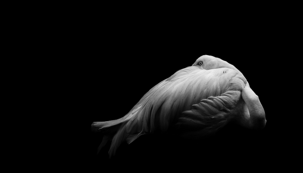 A piece of fine art art photography titled Beauty In Dark by Andi Halil