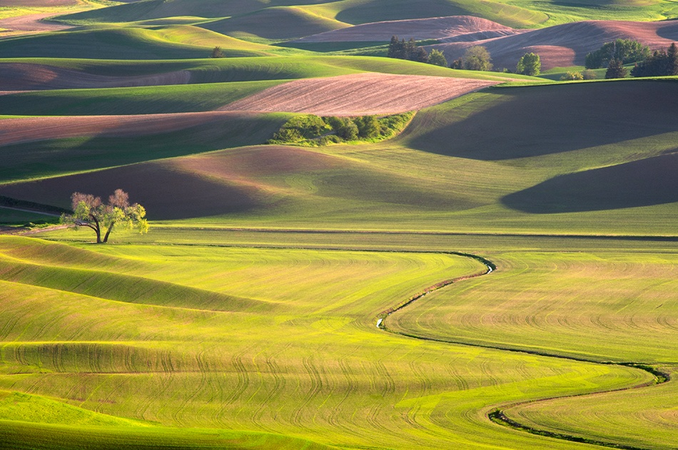 A piece of fine art art photography titled The Curves of Palouse by Doug Solis