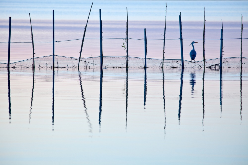 A piece of fine art art photography titled El Saler by Vicente Dolz