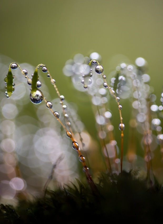 A piece of fine art art photography titled Pearls of Nature by Bee Thalin