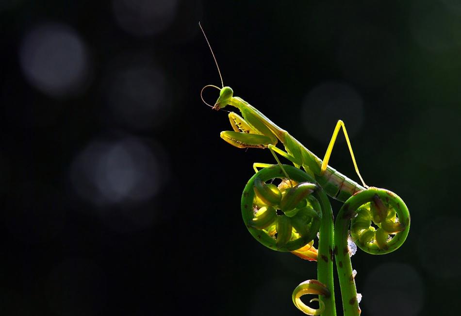 A piece of fine art art photography titled Wonderful Day by Nordin Seruyan