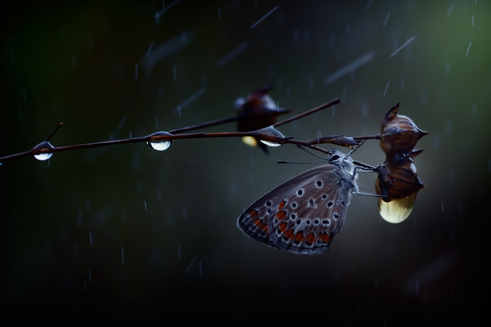 A piece of fine art art photography titled In the Rain by Antonio Grambone