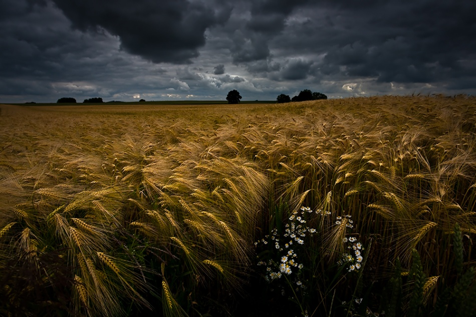 A piece of fine art art photography titled Time for the Harvest by Repro