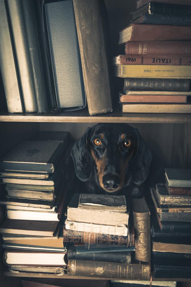 Der kleine Bibliothekar - Little Librarian