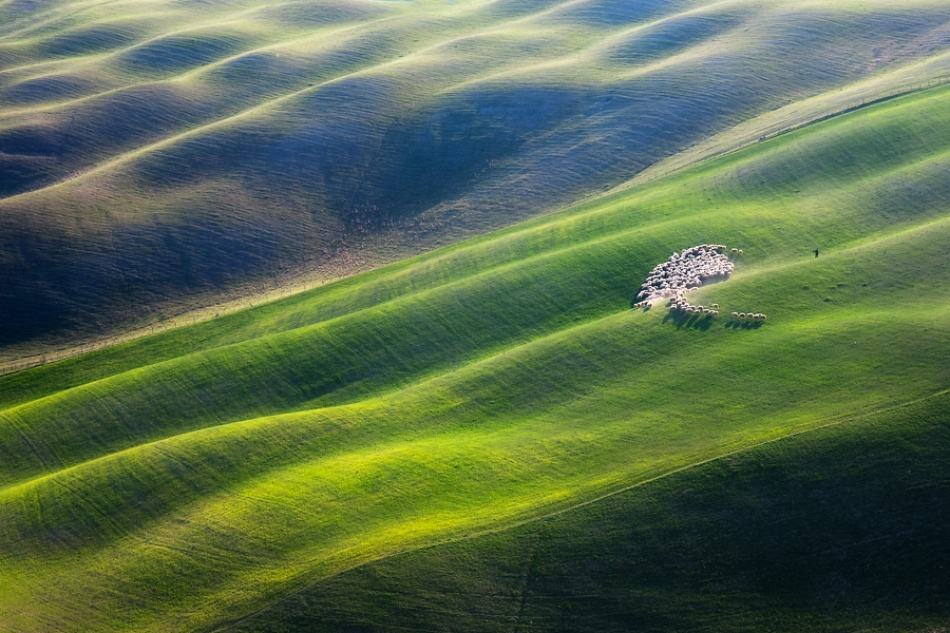 A piece of fine art art photography titled Shepherd With 300 by Marcin Sobas
