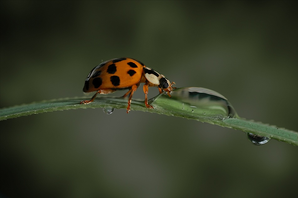 A piece of fine art art photography titled Thirsty Lady Bird by Lifeware