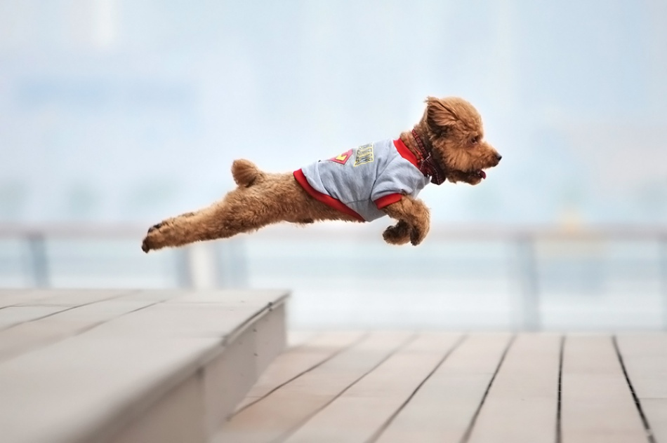 A piece of fine art art photography titled Super Dog by Tianhang Zhang