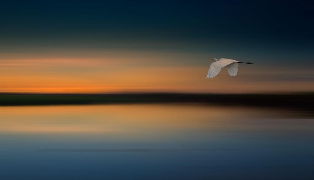 A piece of fine art art photography titled Kakadu Dream by Margaret Morgan