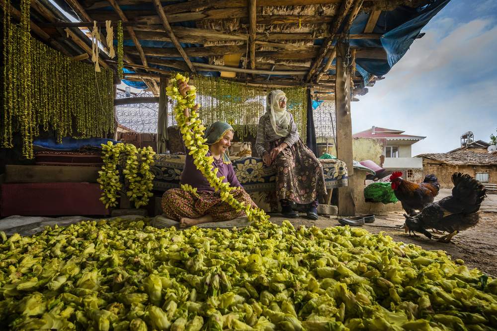 A piece of fine art art photography titled Okra Drying In Rural by F. Dilek Uyar