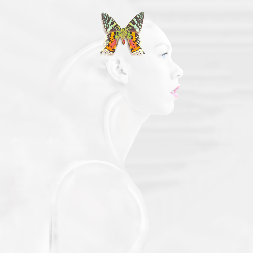 View this piece of fine art photography titled Papillon d'un jour by Thomas Thomopoulos
