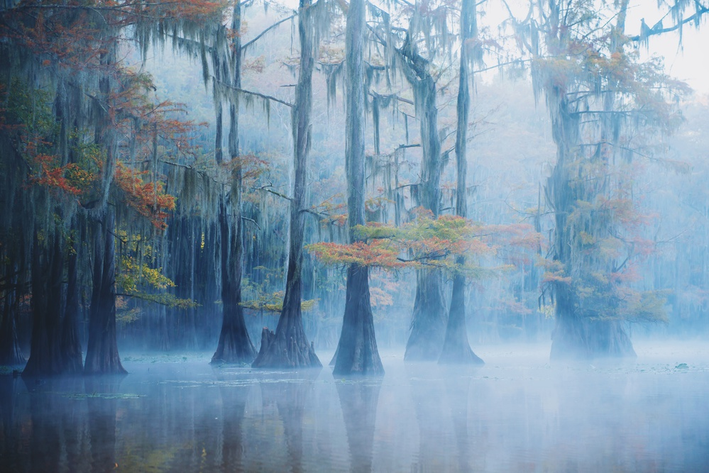A piece of fine art art photography titled Foggy Swamp Morning by Aijing H.