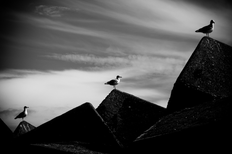 A piece of fine art art photography titled Seagulls by Gonçalo Barriga