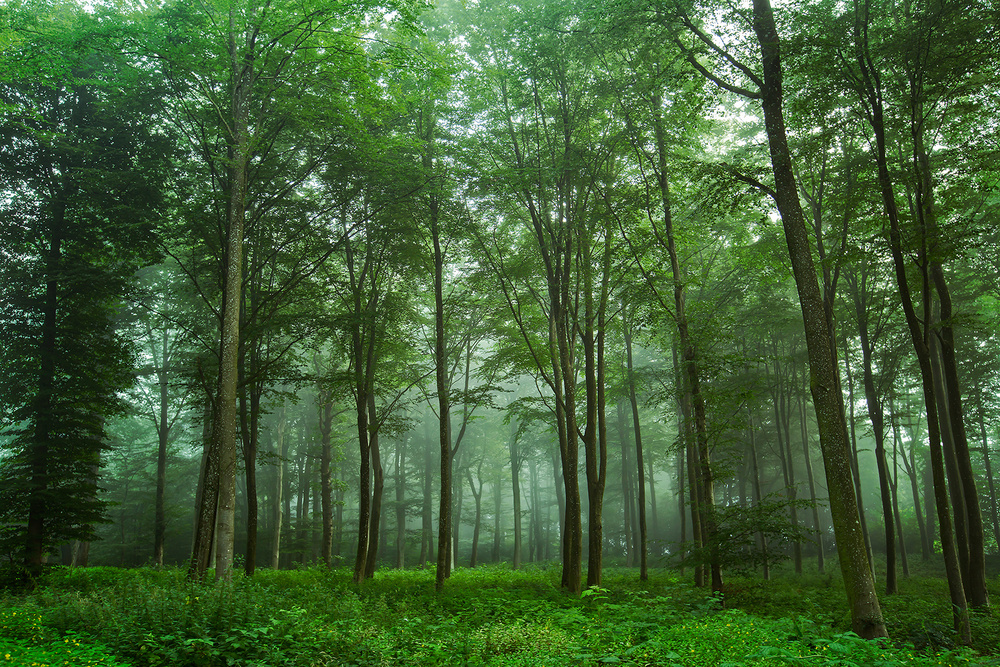 A piece of fine art art photography titled Forest View by Leif Løndal