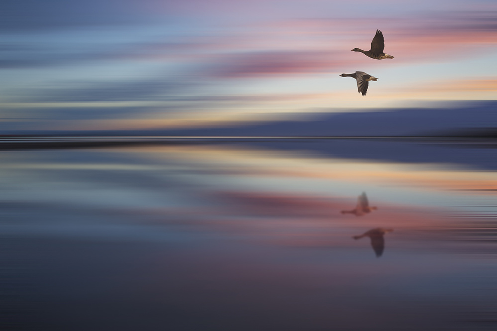 A piece of fine art art photography titled The Flight of the Sunset by Bingo Z