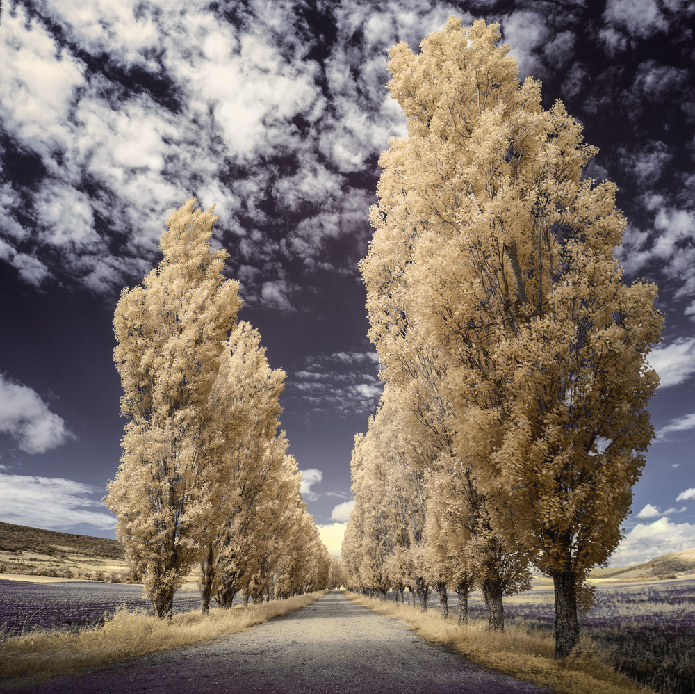 A piece of fine art art photography titled Aranguren Valley (Infrared) by Martin Zalba