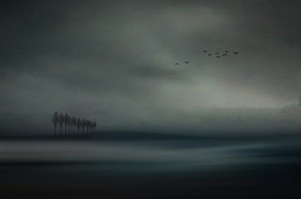 View this piece of fine art photography titled Migrant birds by 天祺TIANQI