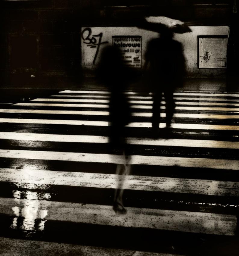 A piece of fine art art photography titled Zebra by Piotr Wiszniewski