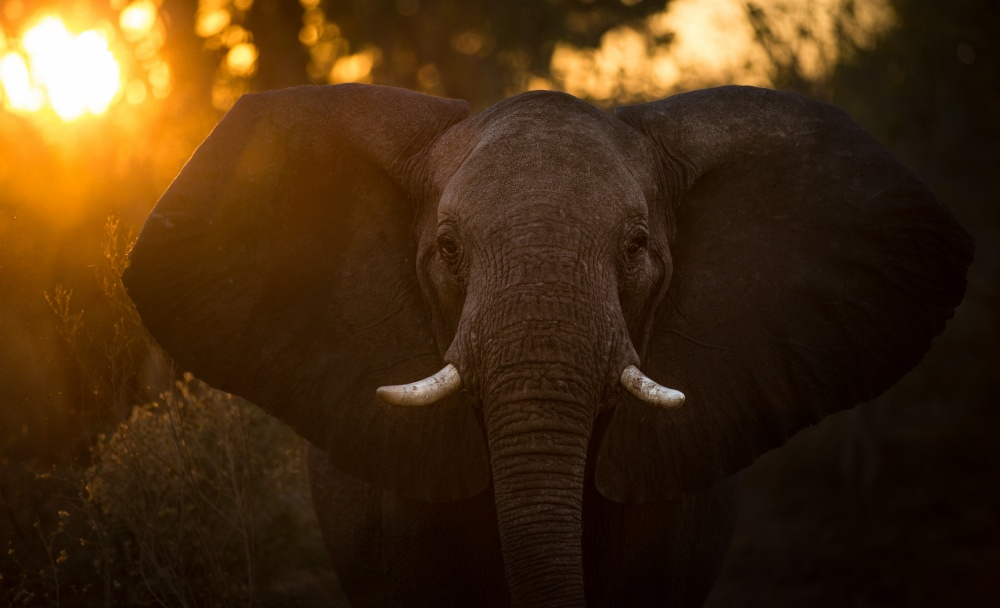 A piece of fine art art photography titled Sunrise Elephant by Keith Andrews