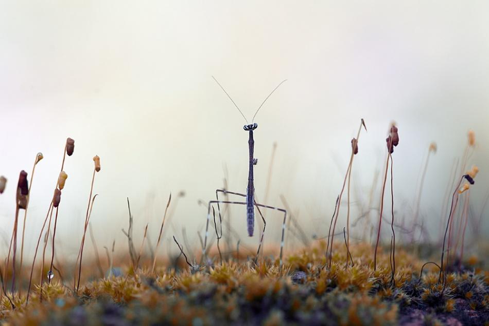 A piece of fine art art photography titled Back Home by Nordin Seruyan