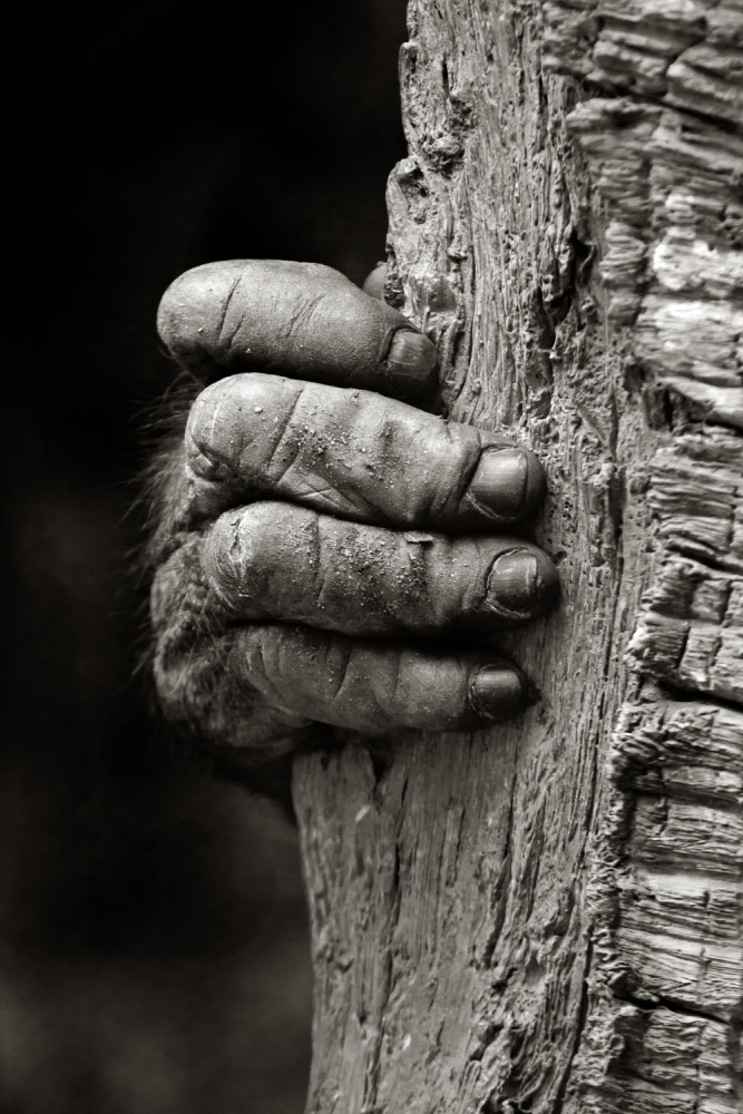 A piece of fine art art photography titled The Hand by Michael Castellano
