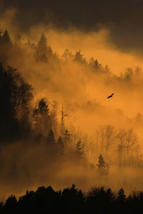 A piece of fine art art photography titled King of Smoky Mountains by Dare Turnsek