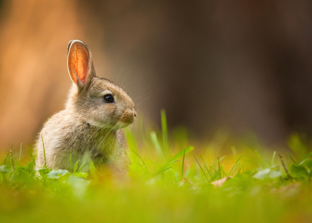 View this piece of fine art photography titled Rabbit by Alex Li
