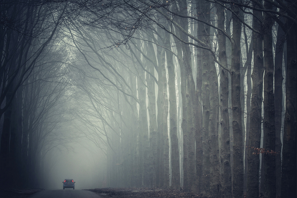 A piece of fine art art photography titled Forest Road by theo peekstok