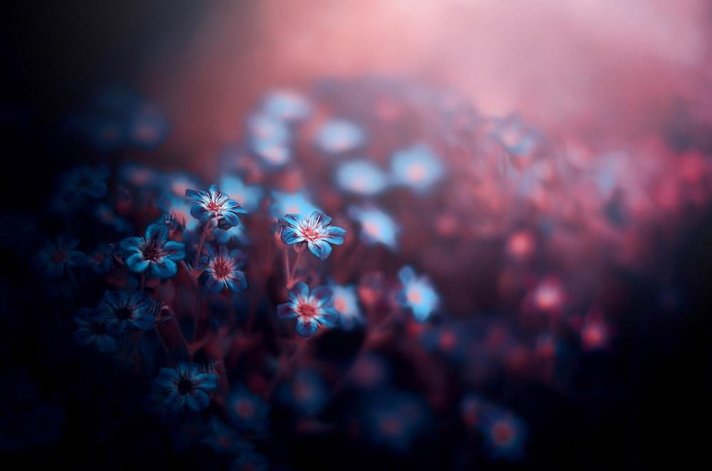 A piece of fine art art photography titled Blue Flowers by ajkabajka