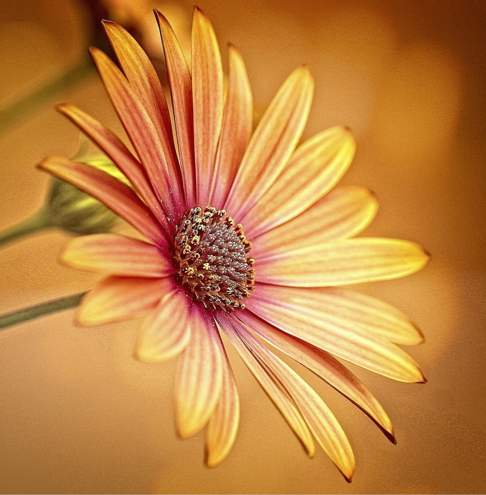 View this piece of fine art photography titled gerbera by Aigars Jukna