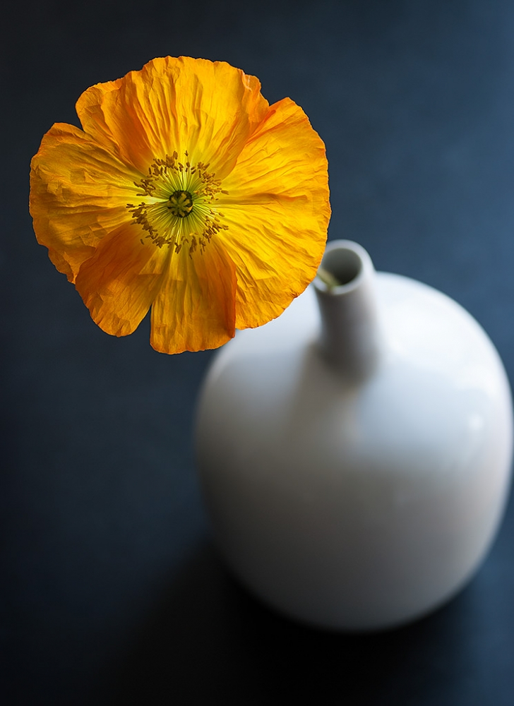A piece of fine art art photography titled Vase With Poppy by prbimages
