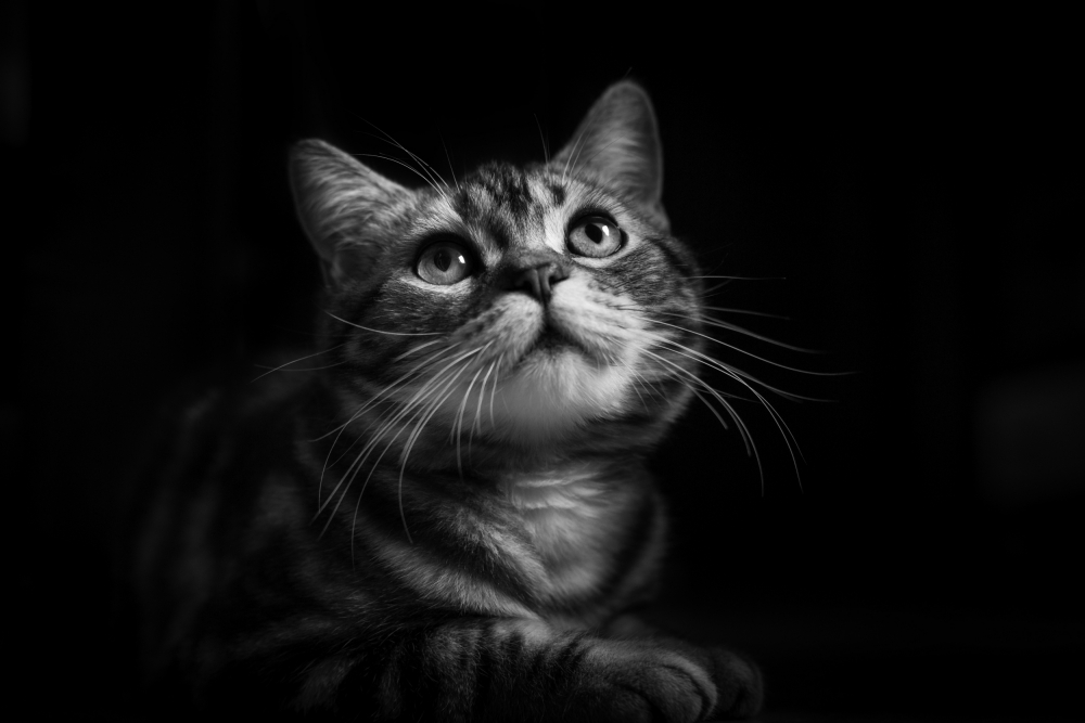 A piece of fine art art photography titled Huzi the Cat by Loody