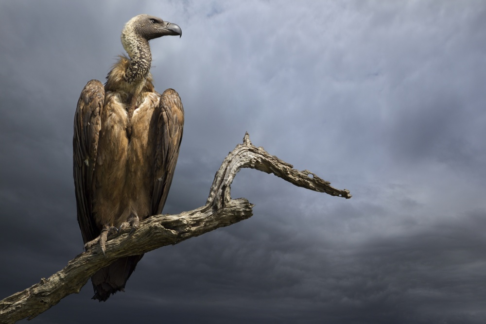 A piece of fine art art photography titled The Vulture by Mario Moreno